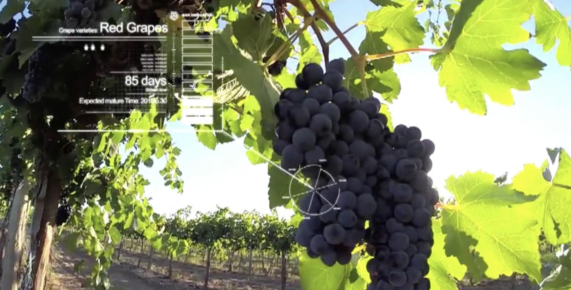 5G Grado di maturazione dell'uva