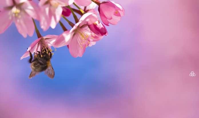 World Bee Project api