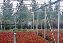 smart agricolture iot
